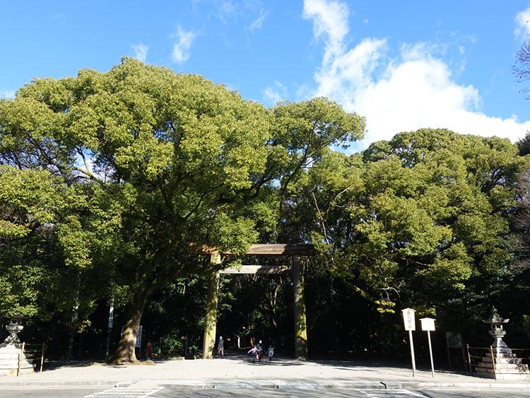 atuta-jingu-niwatori1